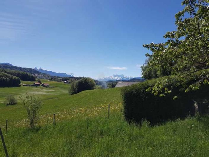 Prairie avec arbre sur le côté droit de l'image et décor de montagnes en arrière plan