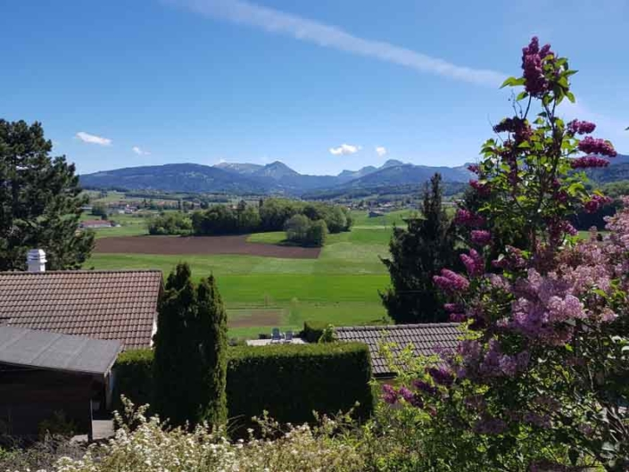 Payages de verdure avec plante aux fleurs violettes sur la droite et décor de montagnes en fond