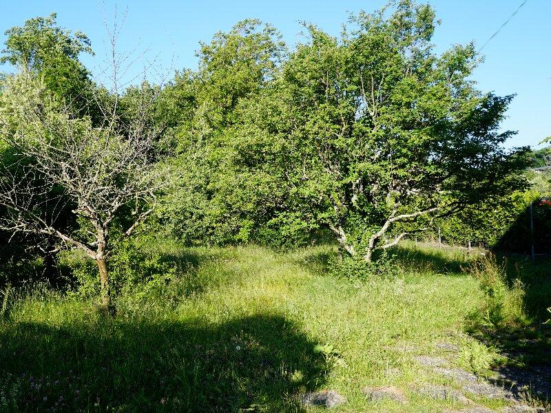 Deux arbres dans jardin avec dalles de pierre sur le côté droit