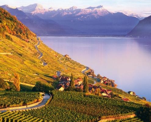 Vue des vignes depuis le lavaux avec les montagnes et le lac léman en toile de fond au coucher de soleil