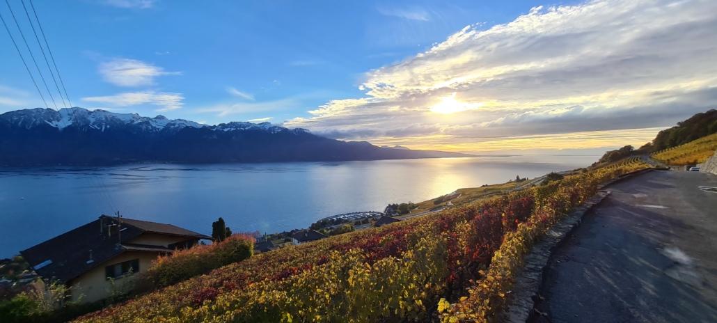 vue sur les vignes du lavaux et le lac léman et les montagnes au coucher de soleil